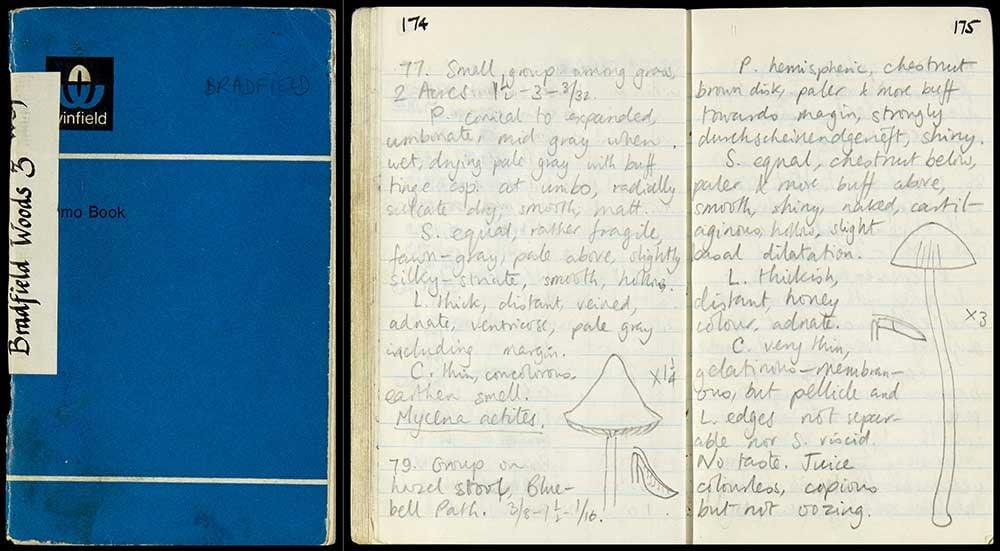 Rackham-archive-digitised-Bradfield-Wood-3-notebook